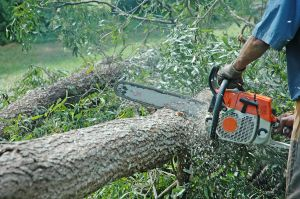 Chainsaws will help you clean up storm-fallen trees and help you prepare to heat your house during winter
