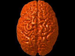 Some brains have mental capacities that are truly astonishing, such as the ability to have photographic memory.