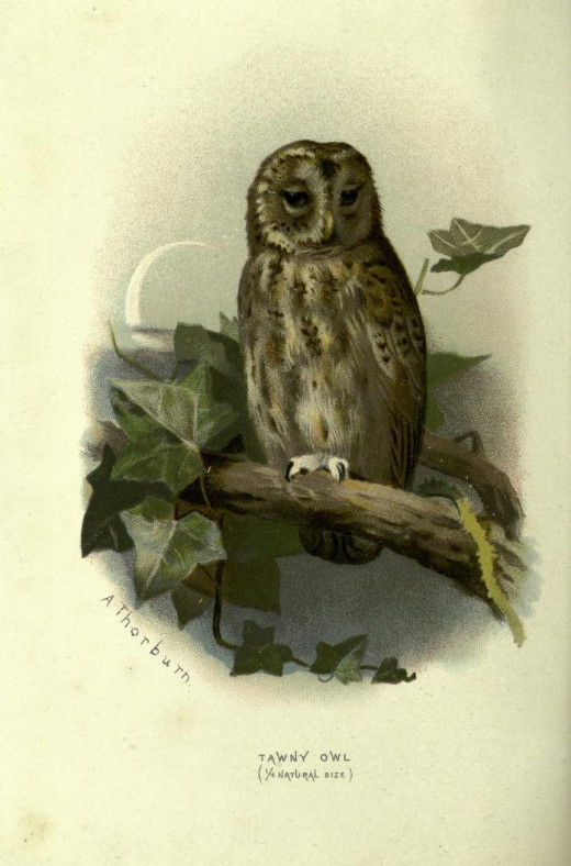 Familiar Wild  Birds --Swaysland { 1883 }