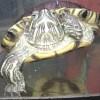 VegMikeZ profile image