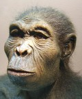 Homo Rising: Humans in the Lower Paleolithic