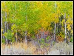 Hiking Reno/Lake Tahoe: The Lower Creek Trails