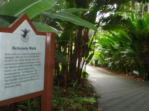 "The beginning of ""Heliconia Walk"", the section dedicated to the cousins of banana."
