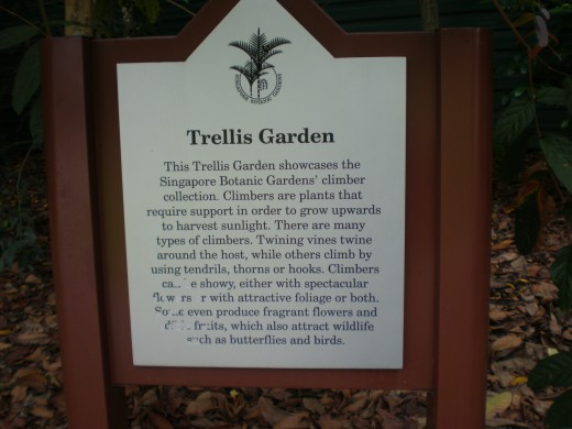 Trellis Garden. All the vines are here.