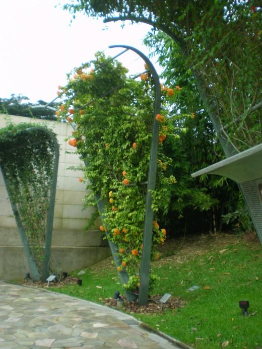 The vines in the Trellis Garden.