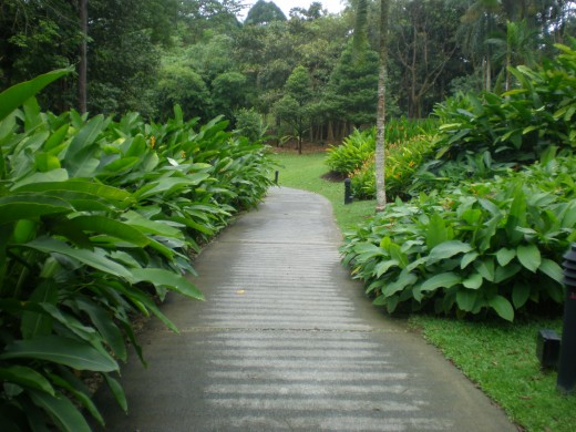 In the middle of the Heliconia Walk