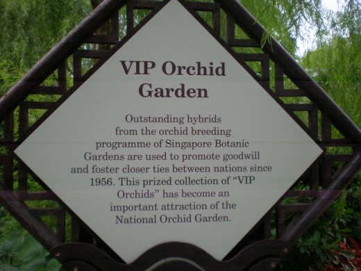 VIP Orchid Garden: Orchids as a diplomatic tool. Like roses or tulips, new breeds of orchids can be named after famous people. The orchids displayed here are all named after foreign dignitaries visiting Singapore, and have been gifted to them.