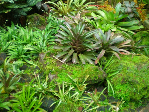 Another bromeliad.