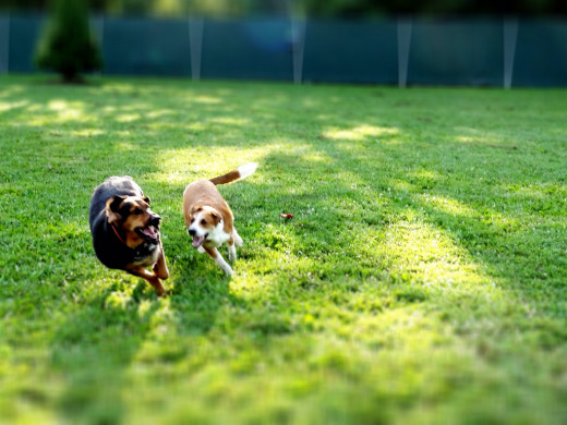 Simple Tips For Taking Your Dog to the Dog Park
