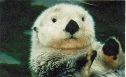 Frolicking Otter