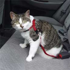 If your kitty is used to a harness, it may be able to keep him from crawling in your lap or under your feet when you drive.
