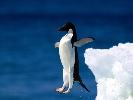 Posts tagged HDTV 1080P Nature Wallpapers Penguin High Definition Wallpaper