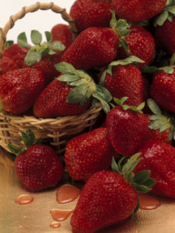 Growing Strawberries from Plants