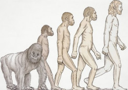 human-evolution from eatwell.in flickr.com