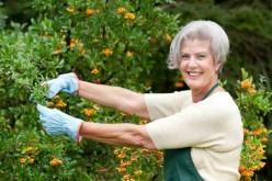 ~~~ Garden Mum ~~~
