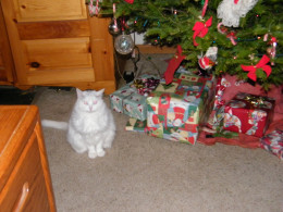 Our ever-faithful Christmas gift watch cat ...