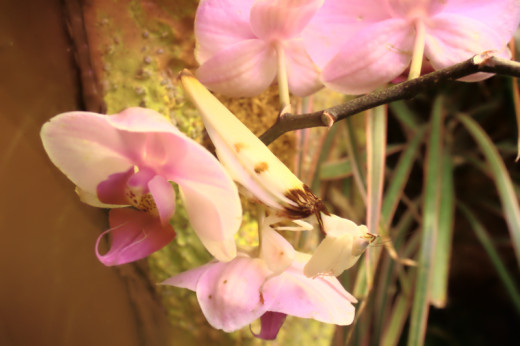 One of those things where google images is frustrating because there are a lot of beautiful photos that I don't have rights to.  And yes, there's a mantis there.