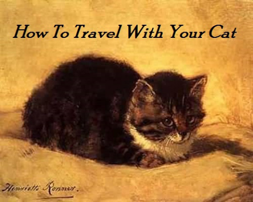 Traveling with a cat doesn't have to be hard.