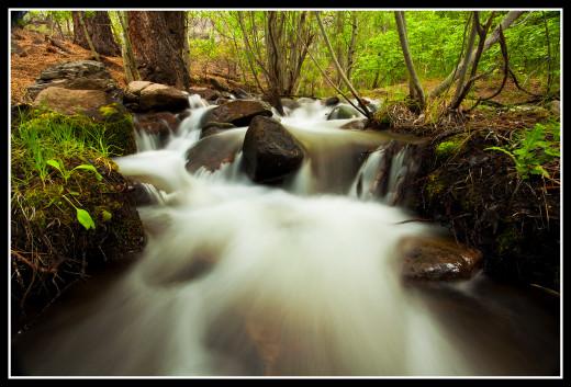 Springtime along Middle Thomas Creek