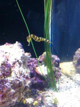 Moody Garden's Aquarium