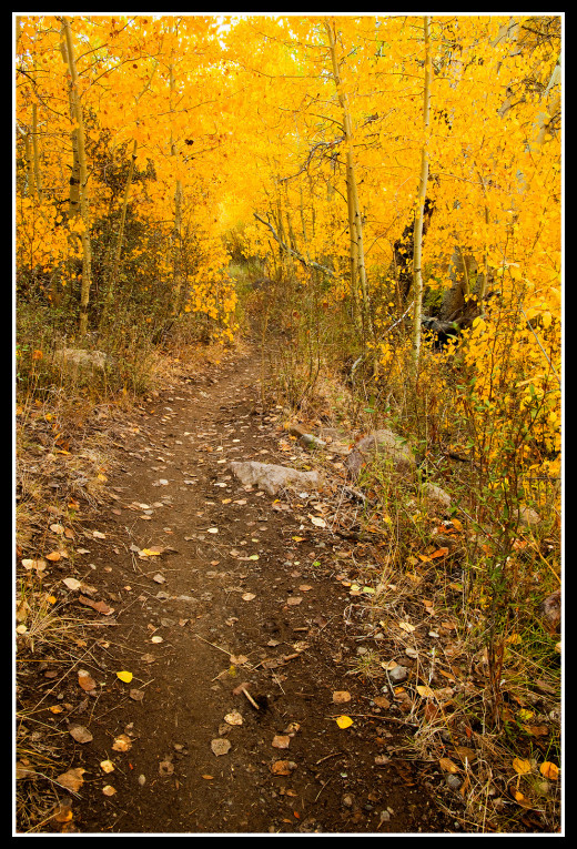 Peak autumn foliage along the Middle Thomas Creek trail occurs from mid to late October depending on weather.