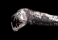 6 Horrific Deep Sea Creatures