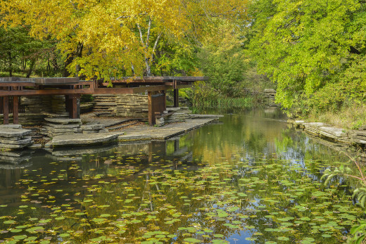 Lillypad pond, Chicago, Illinois