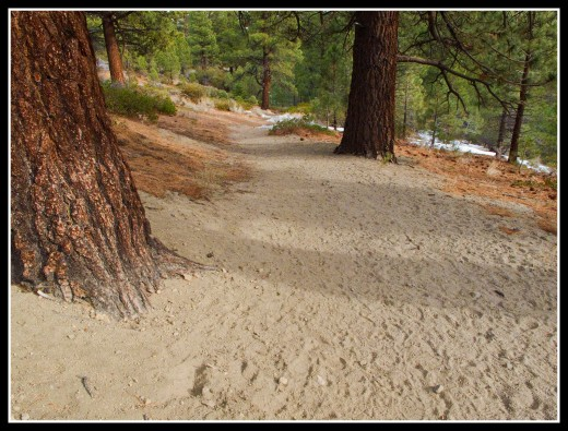Many portions of the trail are moderately sandy