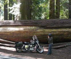 Motorcycle Camping - What to Take