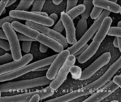 Is Anti-Bacterial Soap Healthy or Harmful?