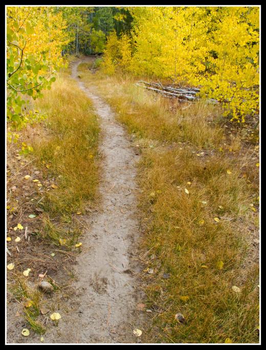 The trail passes through plentiful aspens