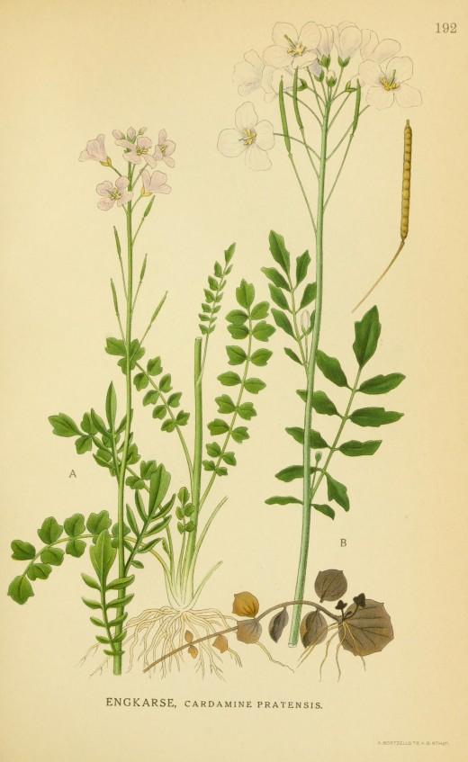 Billeder of Norden's Flora.