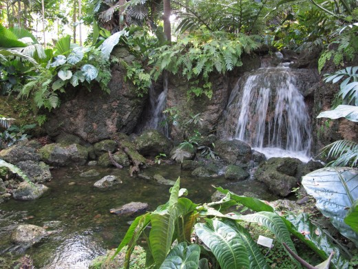 The rain forest is a water-soaked sponge. It stores water that is used by millions of people for their dally needs.