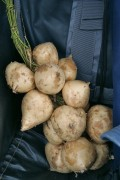 Jicama, a Lesser Known Edible Tuber