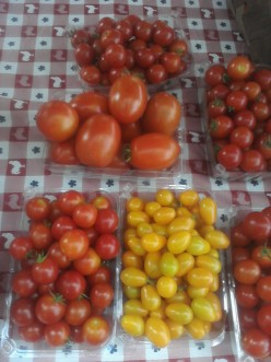 Different types of Tomatoes at local farmers market. That are ready for sell to farmer market customers.