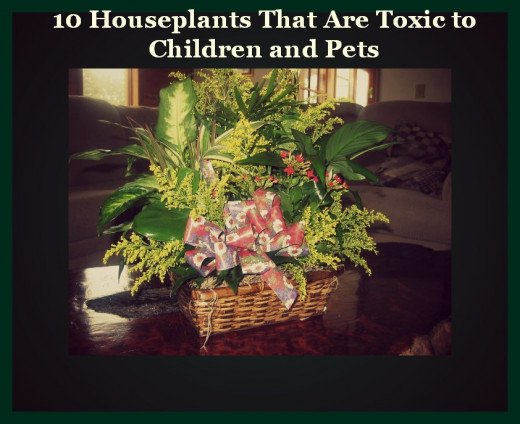 Many Toxic Plants Are Given In Gift Baskets
