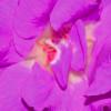 VioletteRose profile image