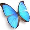 florypaula profile image