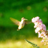 Backyard Bird Watching: Make Your Backyard a Habitat for Wild Birds