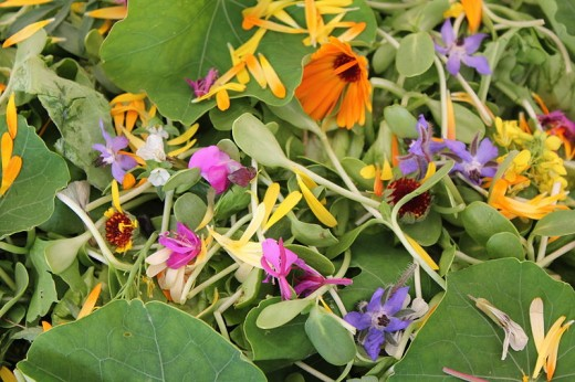 Many wild {and garden} flowers can be used to brighten up a dull looking salad.