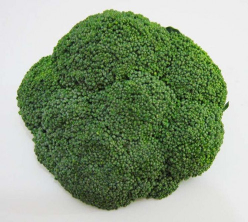A Broccoli Floret ready to be washed and cleaned. To be used in a recipe or to be used as a main dish in cooking your meal.