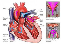 Treatment And Antibiotic Prophylaxis Of Infective Endocarditis