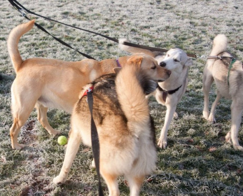 Socialising the Dogs