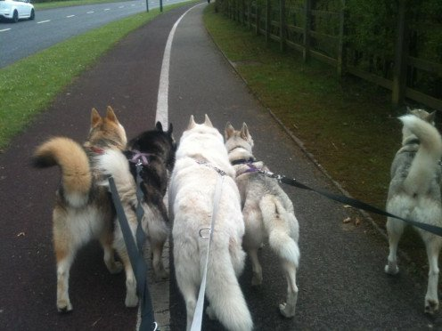 Walking the Pack