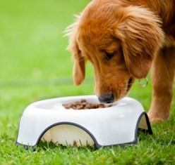 Apple Cider Vinegar for Dogs - The Benefits Explored