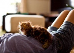 Pets can be an excellent way for those individuals with sensory dysfunction who like animals to connect and address touch hypersensitivity.