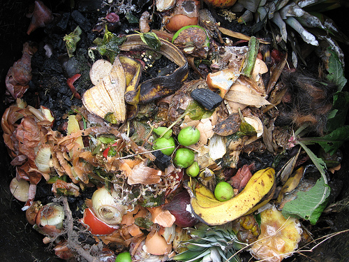 Raw food waste composting