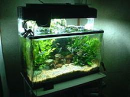 An aquarium with a convex shape.