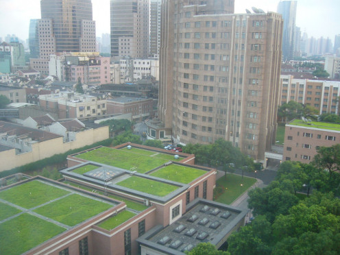 Some companies, buildings and cities have looked toward the green industry to reduce carbon emissions, heat and smog. They grow lawns and other greenery on the rooftop of buildings and skyscrapers.