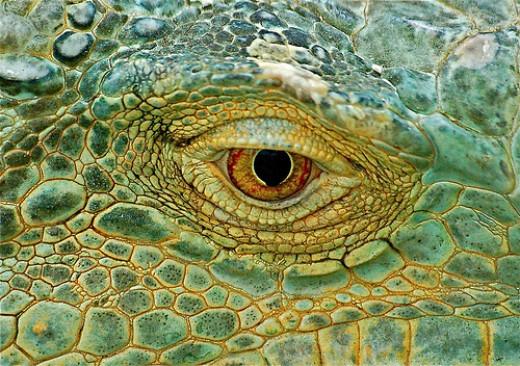 Eye of the dragon from Dumleedoo flickr.com